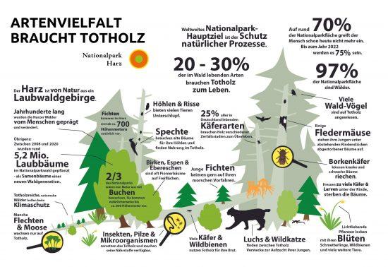 Niedersachsen: Totholz im Wald – Naturwald in Niedersachsen